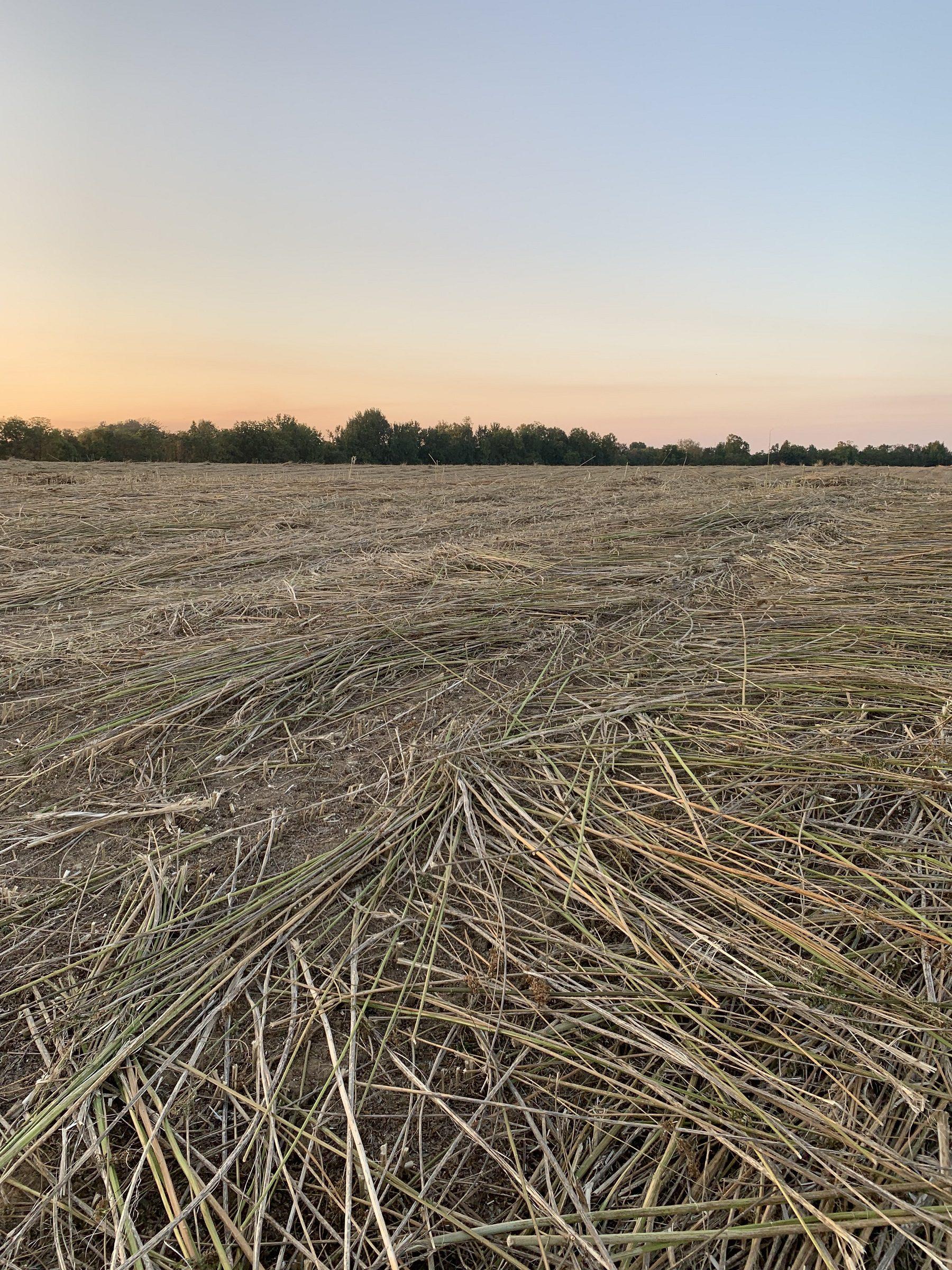hemp fields forever